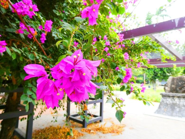 美麗花卉 | 和園 | 日式庭園 | 古樸自然 | 綠樹紅花 | 自然空間 | SuanTou | Lioujiao | Chiayi | 巡日旅行攝