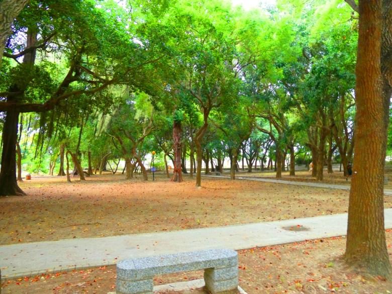 東石神社公園內 | 猶如樹海之森的清幽環境 | 東石 | 朴子 | 嘉義 | 巡日旅行攝
