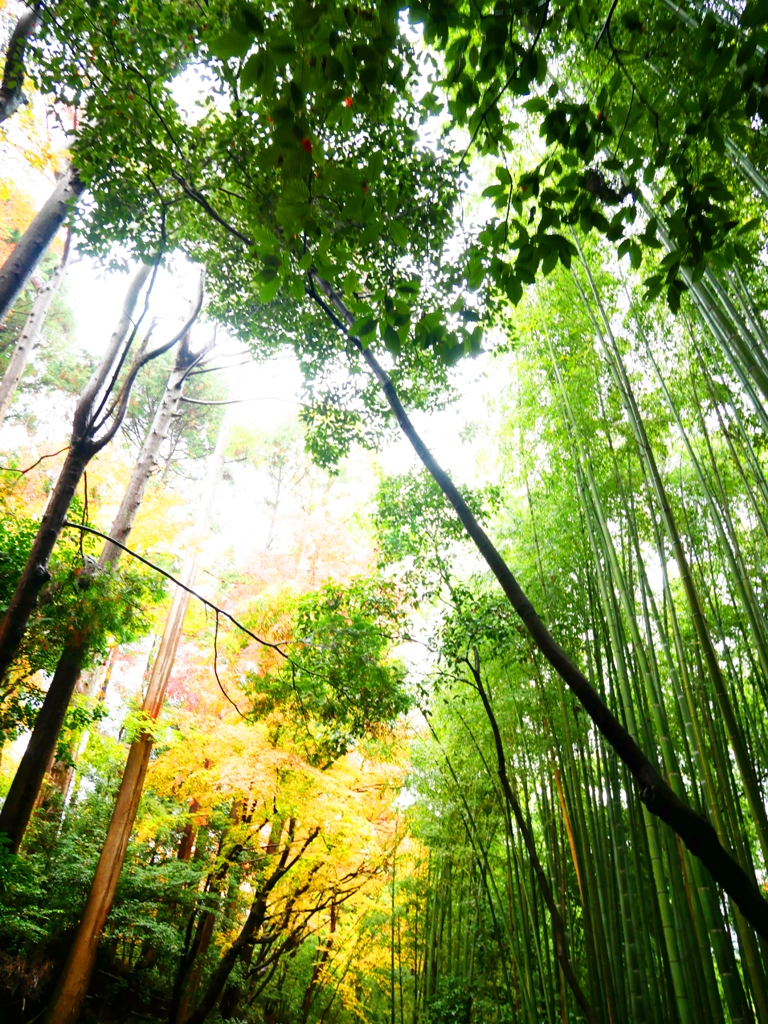 Colorful Japan | 京都嵐山竹林小徑 | Japanese Green attractions | TOP10 | RoundtripJp