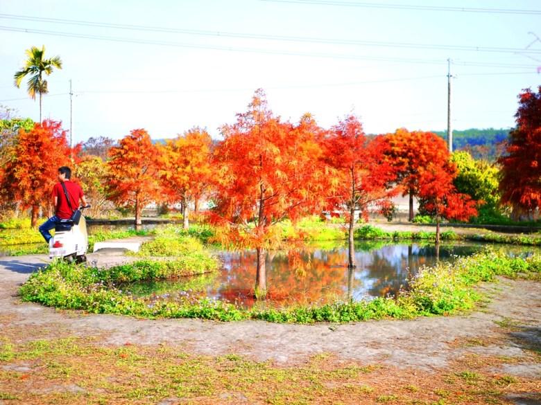水中紅葉落羽松 | 落羽杉 | 台灣人 | 網美景點 | 泰安 | 苗栗 | 巡日旅行攝
