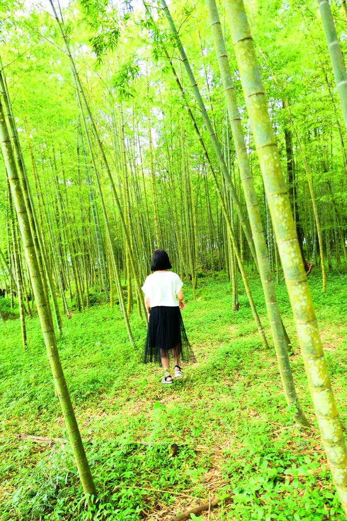 悠悠秘境 | 綠意盎然 | 竹林之海 | 綠色世界 | 鹿谷 | Lugu | 南投 | Nantou | 和風臺灣 | 巡日旅行攝