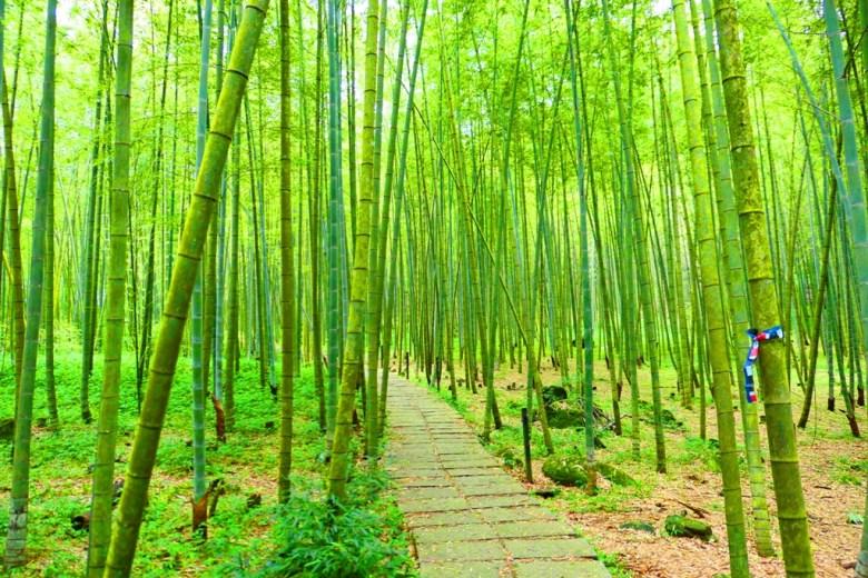 竹林小徑 | Bamboo Forest | 古樸石階 | 空靈放鬆 | 鹿谷 | Lugu | 南投 | Nantou | Taiwan | 巡日旅行攝