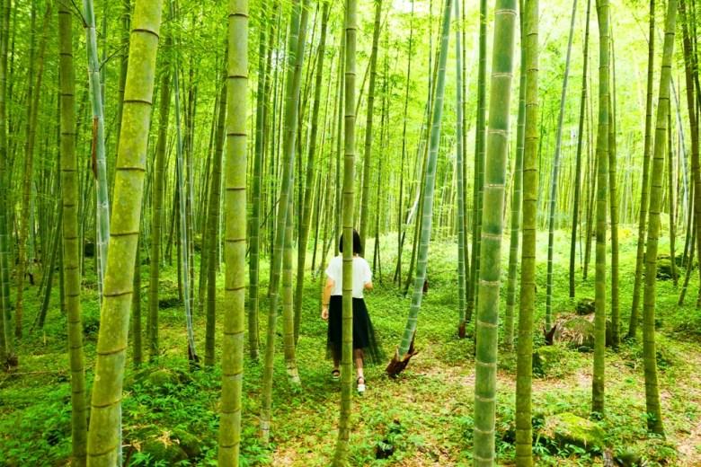 竹林巡禮 | 自然氛圍 | 網美景點 | 清新放鬆 | 鹿谷 | Lugu | 南投 | Nantou | Taiwan | RoundtripJp