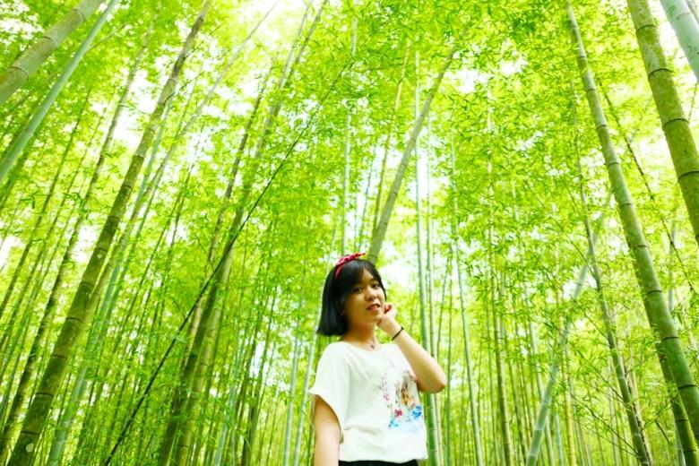 青青綠竹 | 小清新 | 網美 | 孟宗竹 | 鹿谷 | Lugu | 南投 | Nantou | Taiwan | 巡日旅行攝