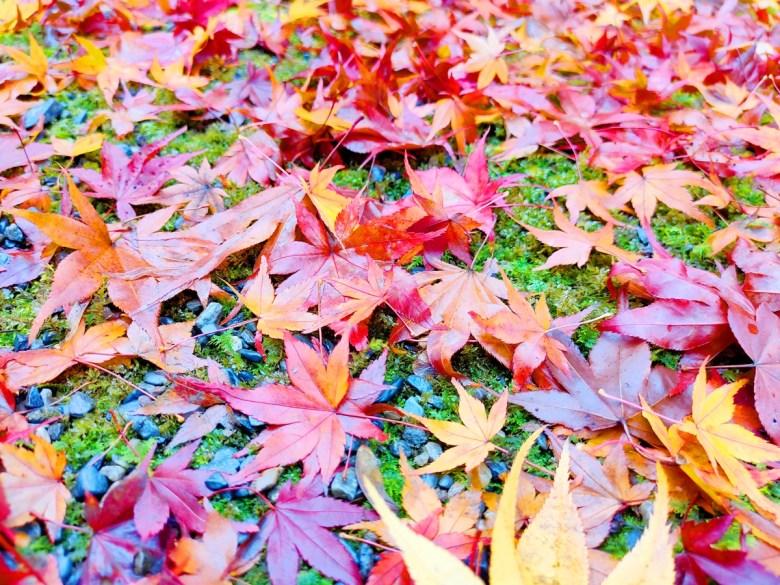 多彩日本 | 常寂光寺楓葉 | 楓葉之國 | 紅葉之國 | 日本的別稱 | 巡日旅行攝