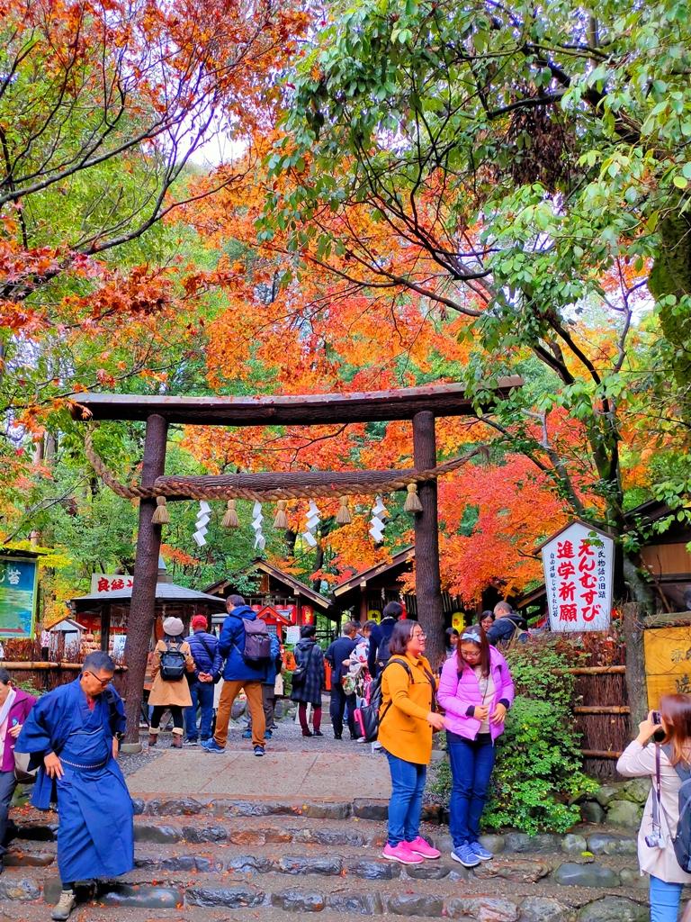 Colorful Japan | 京都府 | 野宮神社 | 日本黑色景點10選 | RoundtripJp