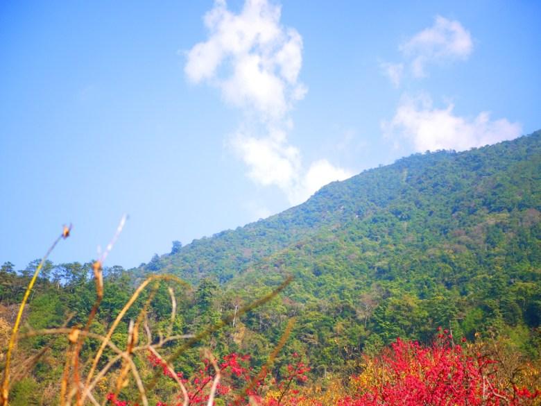 藍天白雲青山紅櫻 | 美麗的像一幅畫 | 緋寒櫻 | 八仙山國家森林遊樂區 | Basianshan National Forest Recreation Area | 巡日旅行攝