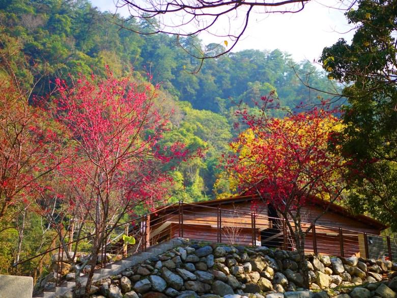 被大自然環抱的小木屋 | 山櫻花 | 洗手間 | 八仙山國家森林遊樂區 | Basianshan National Forest Recreation Area | 巡日旅行攝