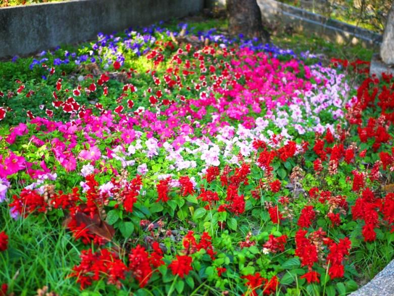 百花綻放的花園 | 梅山公園 | メイシャンこうえん | Meishan Park | 梅山 | 嘉義 | RoundtripJp