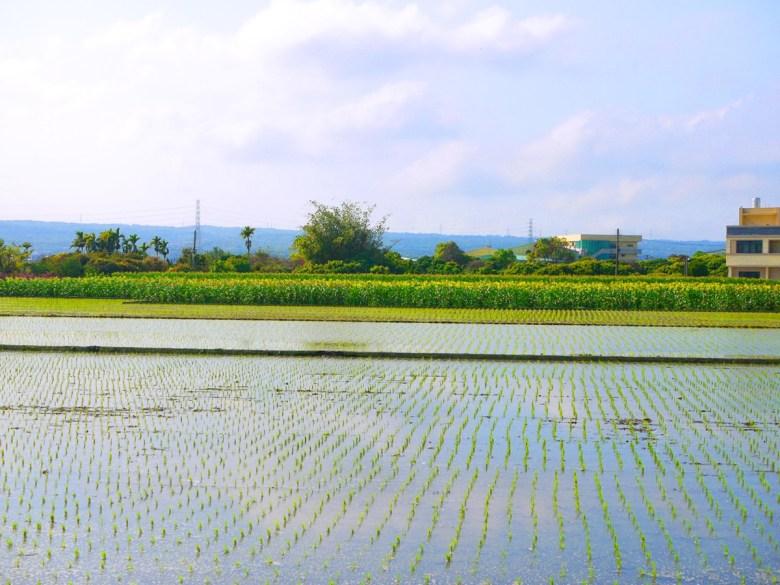 農田 | 水稻新苗 |沿途田野風光 | 溪岸路 | 烏日 | 台中 | 一抹和風 | 巡日旅行攝