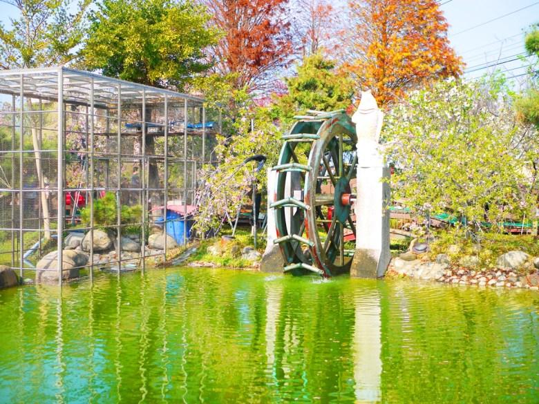 水車與青池 | 綠水與粉櫻 | 落羽松 | 芬園花卉生產休憩園區主題櫻花 | 烏日 | 台中 | RoundtripJp
