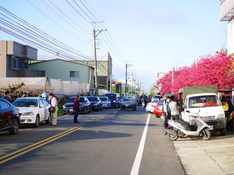 滿是新年期間賞花追櫻的車潮與人潮 | 十分擁擠的鄉間小路 | 新社區興社街一段200號 | 新社 | 台中 | 巡日旅行攝