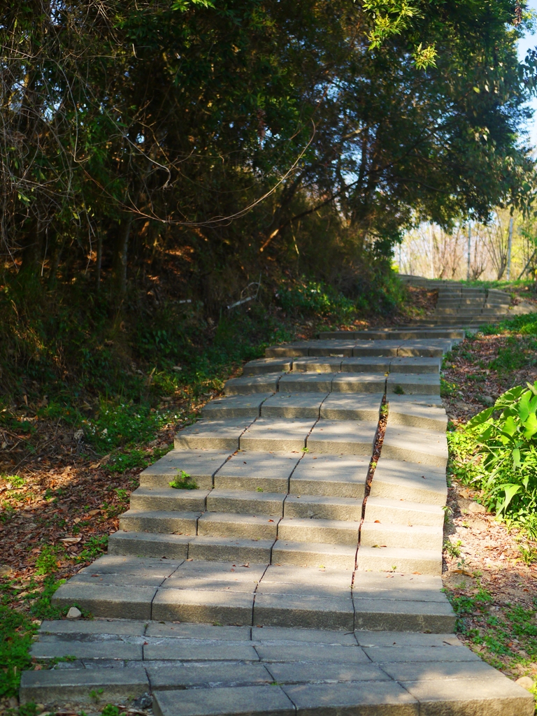 坡度略陡 | 後段步道 | 漳和撼龍步道尾端 | 漳和 | 南投 | Zhang Heli Dragon Trail | 巡日旅行攝