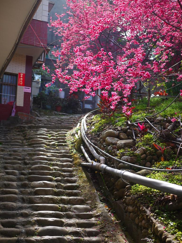 湖水里八重櫻 | 隱世絕美櫻花秘境入口 | 石頭階梯 | 古樸民宅 | 臺灣傳統建築 | 巡日旅行攝