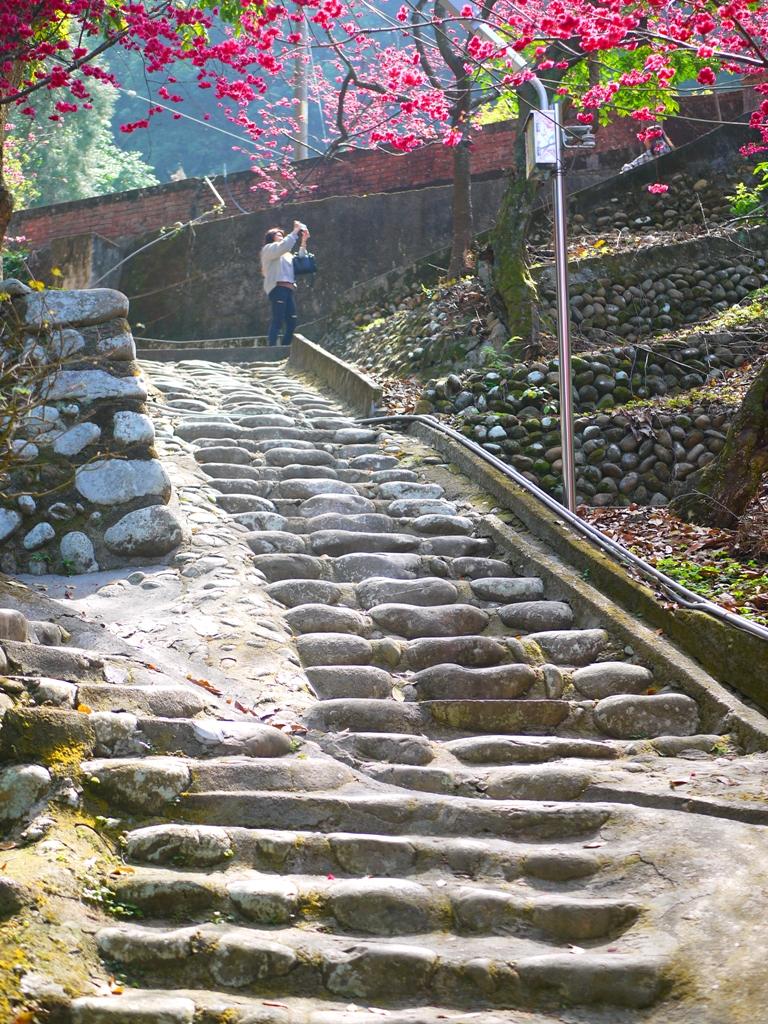 古色古香的臺灣風景 | 拍照的旅人 | 美麗的八重櫻秘境 | 湖水 | 員林 | 彰化 | 巡日旅行攝