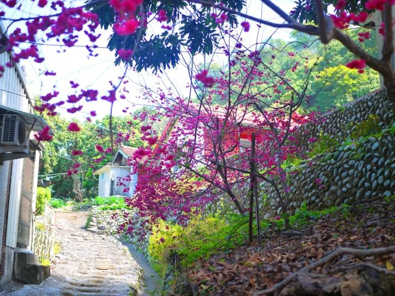 階梯的盡頭是湖水里八重櫻秘境的終點 | 臺灣傳統建築 | 三合院 | 湖水 | 員林 | 彰化 | 巡日旅行攝