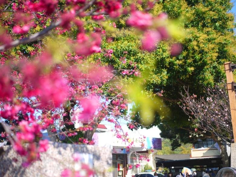 櫻花下的泰安派出所 | 人潮眾多 | Taian | Miaoli | 泰安 | 苗栗 | 巡日旅行攝