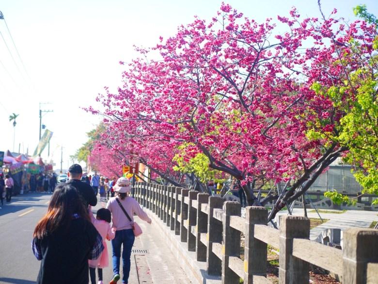免費停車場前大馬路 | 左邊為櫻花季才有的攤販區 | 右邊為停車場八重櫻 | Taian | Miaoli | RoundtripJp