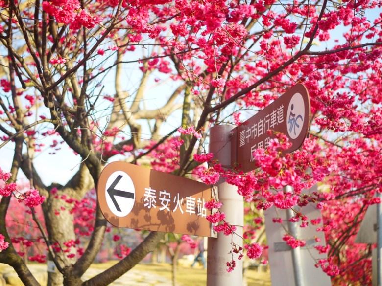泰安火車站指示牌 | 臺中市自行車道后里段 | 美麗的櫻花公園 | Houli | Taichung | 和風巡禮 | 巡日旅行攝