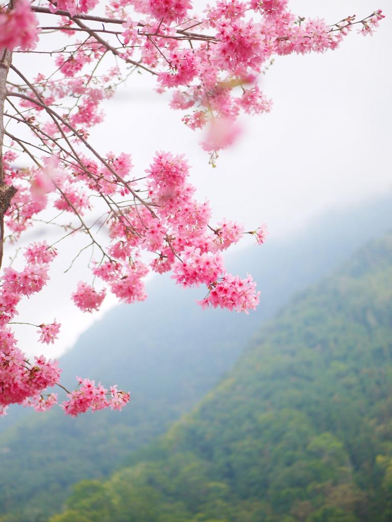 紅粉佳人與青山之美 | 雲霧繚繞 | 石壁風景區 | Gukeng | Yunlin | 巡日旅行攝