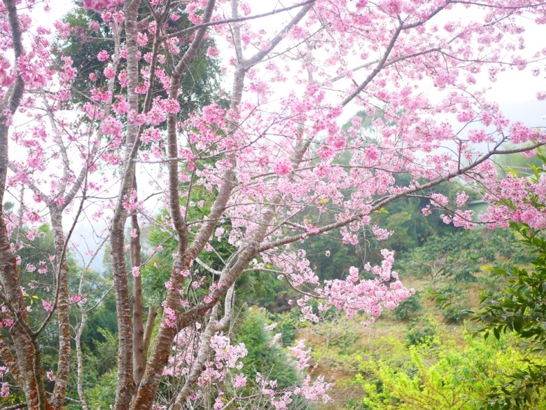 紅粉佳人 | 綠色自然 | 親近大自然 | 森呼吸 | 石壁風景區 | Gukeng | Yunlin | 巡日旅行攝