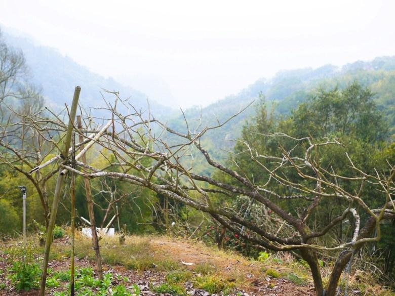 濃濃原始風味的深山   海拔1,200公尺之上   石壁風景區   Gukeng   Yunlin   RoundtripJp