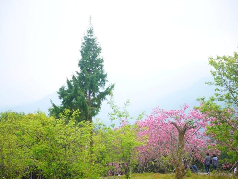 青翠的園區林木 | 臺灣旅人 | 被霧氣遮掩的青山 | 仙氣飄逸 | 南投鳳凰自然教育園區 | 鹿谷 | 南投 | 巡日旅行攝