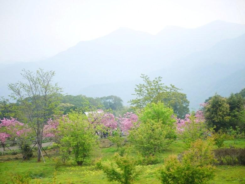 從觀景迴廊鳥瞰的畫面 | 南投鳳凰自然教育園區 | ルーグー | Lugu | Nantou | RoundtripJp