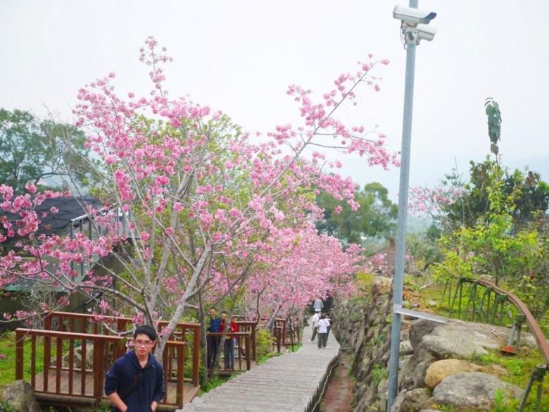有著櫻花觀景亭的櫻花步道 | 網美景點 | 熱門打卡地點 | 南投鳳凰自然教育園區 | ルーグー | Lugu | Nantou | RoundtripJp