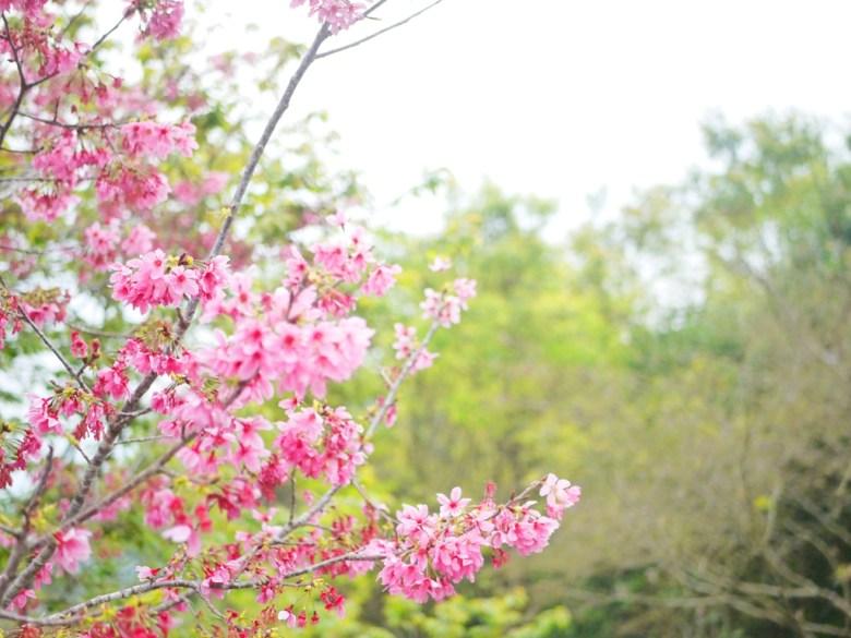 河津櫻與綠樹之美 | 日本味 | 南投鳳凰自然教育園區 | ルーグー | Lugu | Nantou | RoundtripJp