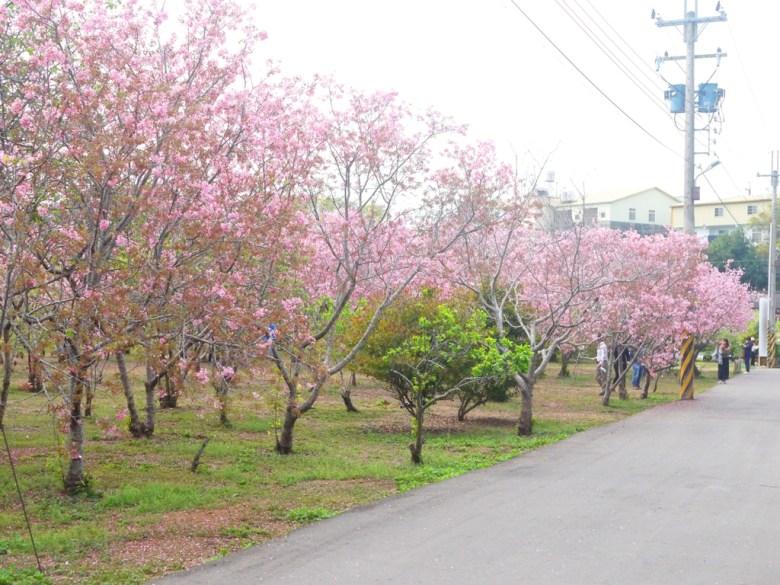 櫻花秘境旁小路 | 前方為秘境入口 | 富士櫻の櫻花秘境 | 新社 | 台中 | RoundtripJp