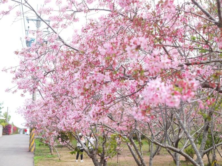 賞櫻秘境旁小巷弄 | 入口後小路 | 富士櫻の櫻花秘境 | 新社 | 台中 | 巡日旅行攝