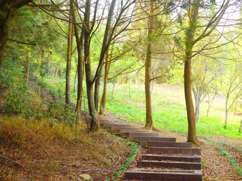 森林步道 | Forest Trail | 森林 |金龍山觀景臺 | 魚池 | 南投 | 巡日旅行攝