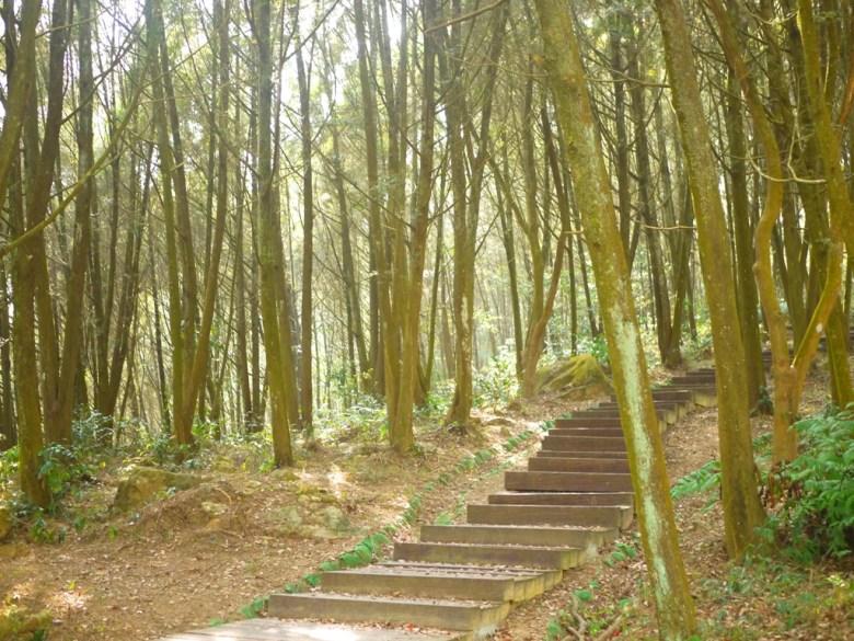 古樸自然 | 森林步道 | 百樹包圍 | Forest Trail | 森林遊步道 | 魚池 | 南投 | ユーチー | Yuchi | Nantou | 巡日旅行攝