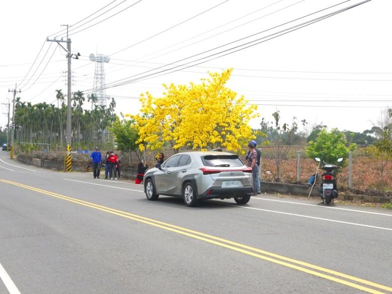 駐足拍照的臺灣旅人 | 滿滿賞花的臺灣民眾 | 芬園鄉139縣道 | Fenyuan | Changhua | 巡日旅行攝
