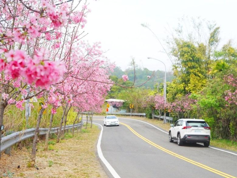 漂亮的櫻花大道 | 富士櫻 | Sakura | さくら | サクラ | 芬園鄉139縣道 | Fenyuan | Changhua | RoundtripJp