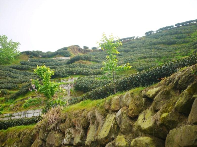 層層堆疊 | 茶綠 | 清新空氣感的茶園 | 南投八卦茶園 | 竹山 | 南投 | 巡日旅行攝