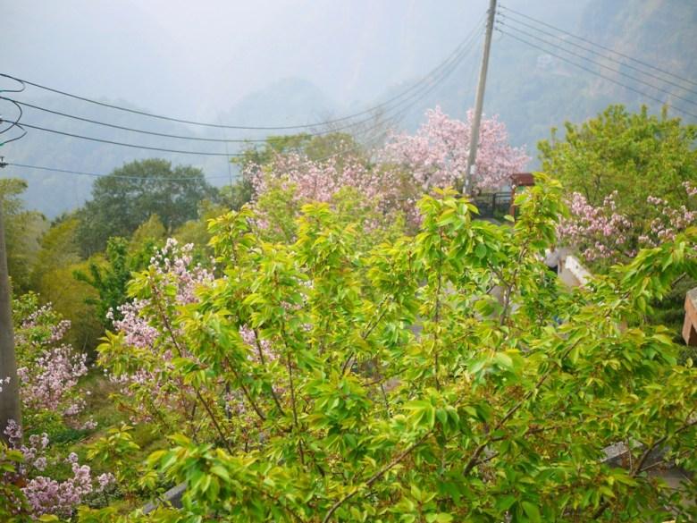 高處鳥瞰通往展望台與八卦回音亭的道路 | 南投八卦茶園 | 竹山 | 南投 | 巡日旅行攝