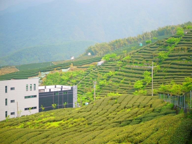 高山上的茶園 | 滿坑滿谷的茶樹海 | 綿延不絕 | Zhushan | Nantou | RoundtripJp