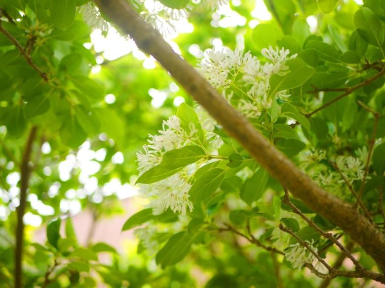 滿滿自然生態的國小 | 苑裡 | 苗栗 | ユエンリー | ミアオリー | 巡日旅行攝