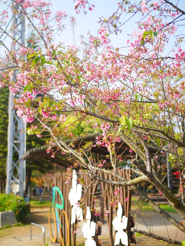 櫻花公園 | 銅鑼環保公園 | 銅鑼 | 苗栗 | トンルオ | ミアオリー | Tongluo | Miaoli | RoundtripJp