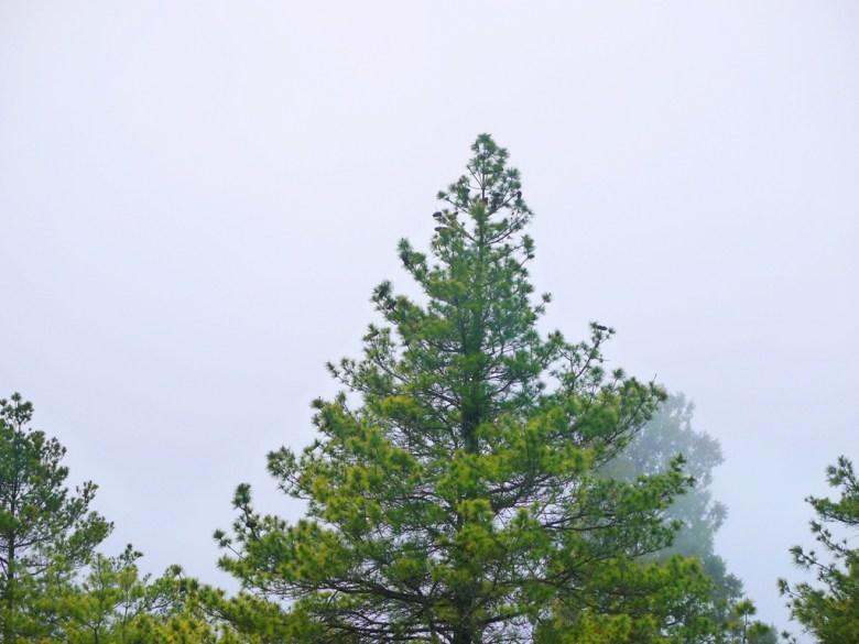 海拔2,560公尺之上 | 霧氣奔騰 | 濃霧覆蓋 | 高山氣候 | 大雪山國家森林遊樂區 | 和平 | 台中 | 巡日旅行攝