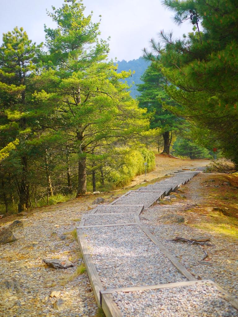 瑞雪亭後方步道 | 大雪山 | 大雪山國家森林遊樂區 | 和平 | 台中 | 巡日旅行攝