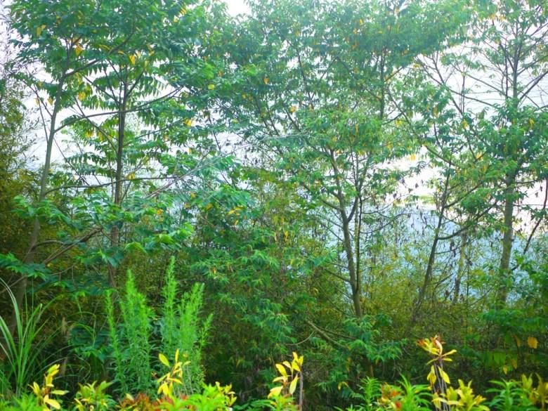 高山 | 群山之美 | 大自然 | 綠色環境 | 免費停車場前景緻 | 泰安 | 苗栗 | 巡日旅行攝