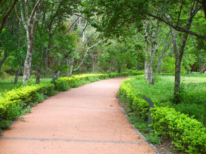 櫻花園步道 | Cherry blossom garden trail | 山櫻花 | 霧社櫻 | 八重櫻 | Aowanda National Forest Recreation Area | Qinai | Renai | Nantou | 巡日旅行攝
