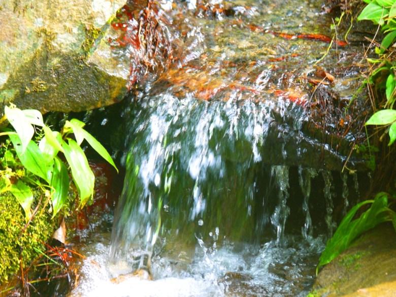 清澈冷冽的小溪流 | 山上的水 | 奧萬大國家森林遊樂區 | レンアイ | ナントウ | RoundtripJp