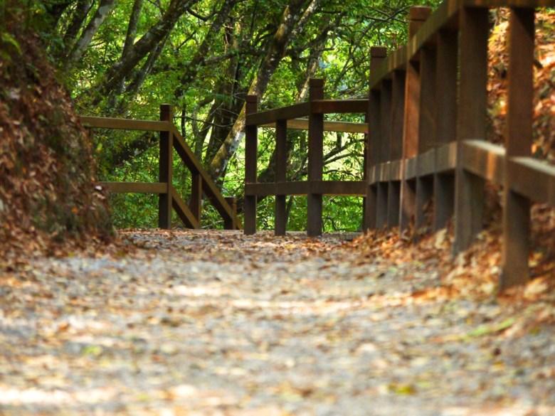 好漢坡步道 | Strongman Slope | 奧萬大國家森林遊樂區 | レンアイ | ナントウ | RoundtripJp