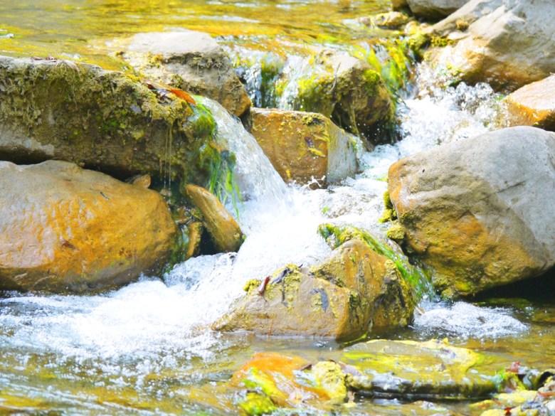 清澈涼爽的溪流 | 奧萬大國家森林遊樂區 | レンアイ | ナントウ | 巡日旅行攝