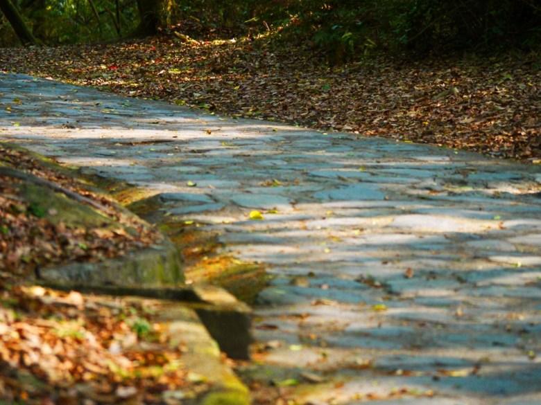 自然的森林小徑 | 往奧萬大吊橋方向 | 奧萬大國家森林遊樂區 | レンアイ | ナントウ | RoundtripJp