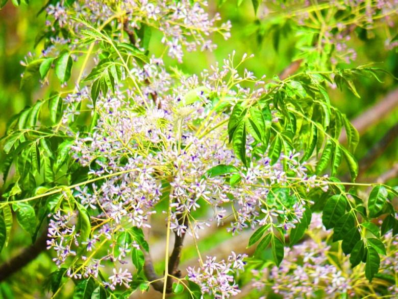 美麗的小花 | 奧萬大吊橋 | Aowanda Suspension Bridge | 奧萬大國家森林遊樂區 | レンアイ | ナントウ | RoundtripJp